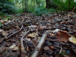 Leaves on the ground with green trees behind.  Autumn Poem